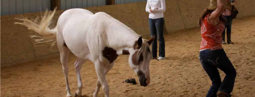 Faith Based Equine Assisted Philosophy | FBEAP Seminar Certification ...