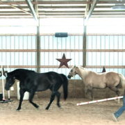 Equine Assisted Learning for teens