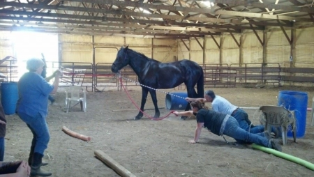 People holding horse reins